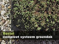 compleet systeem duurzaam groen dak