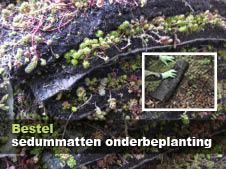 onderbeplanting duurzaam groen